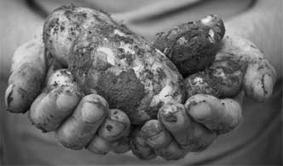 RANGHINELLI  - 1944: di quando a Gattorna nascondevamo le patate e ogni giorno rischiavamo il rastrellamento