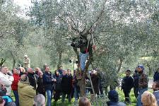 Il nuovo sogno? Ricominciare a coltivare olive: i corsi degli olivicoltori fanno boom di iscrizioni
