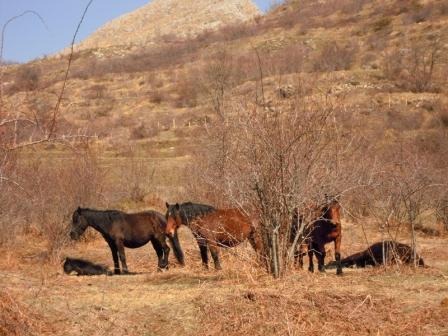 da giugno a settembre emozionanti giornate di WILD HORSE WATCHING: sulle Tracce dei Cavalli Selvaggi nel Parco dell'Aveto