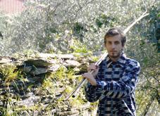 """Dal """"perteghin"""" allo scuotitore ad aria compressa: come è cambiata la raccolta delle olive (Ma certe tradizioni non spariranno mai)"""