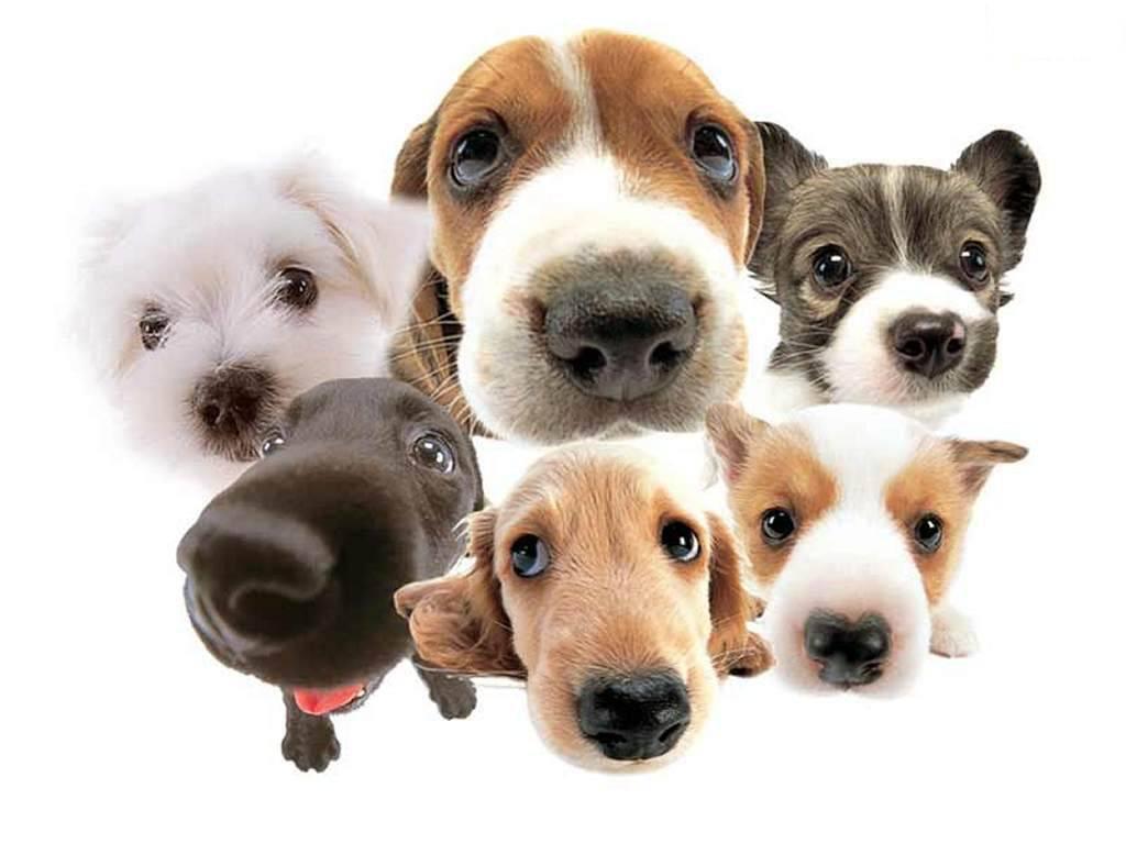 28 novembre, 6 de 27 dicembre, Chiavari: banco dell'ass. Ayusya per raccogliere fondi pro animali