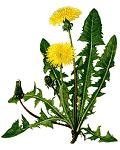 """SORI - Sabato 18 Aprile all'insegna della riscoperta della cucina tipica ligure con la """"Gita delle erbe"""""""