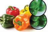 IL CORFOSIGLIO - Peperoni: sai quali sono meglio cotti o crudi?