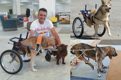 """""""Cerco di dare finali sereni a storie atroci"""": con rotelle e materiali di riciclo Luciano dona nuove zampe ai cani disabili (attenzione, storie forti)"""