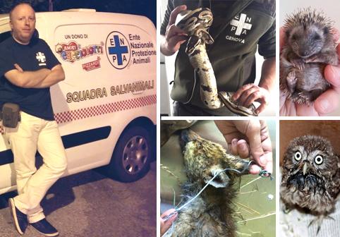 I GUARDIANI DEGLI ANIMALI -  Avete trovato una volpe ferita nel bosco o avete un serpente in giardino? Ecco cosa fare