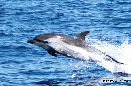 Vedere delfini e balene: un sogno che si avvera nel Mar Ligure, ecco dove incontrarli
