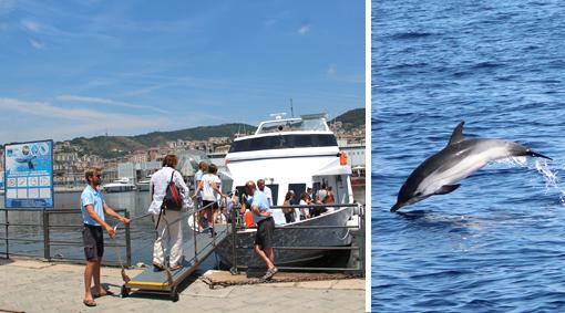 #CorfoleGite: una bella giornata in barca tra delfini, balene e pesci luna