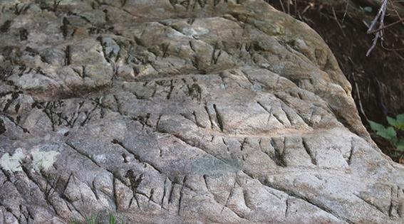 IMPORTANTE SCOPERTA IN VAL CICHERO - Un grande lastrone di roccia ricoperto di incisioni forse legate a un culto pagano