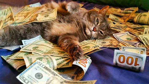 #DirittoUtile - Eredità: si può lasciare al gatto?