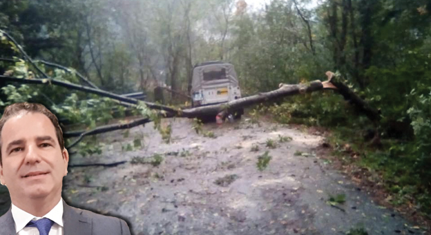 Nell'entroterra il pericolo viene dagli alberi: a Cicagna studio ordinanza urgente per il taglio di quelli sulle strade
