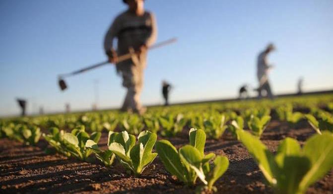 #DIRITTOUTILE - Come avviene l'usucapione di un terreno agricolo?