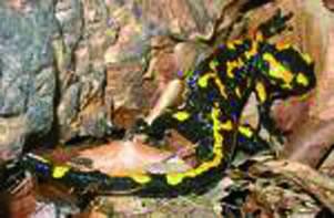 La salamandra, lo stupore dei bimbi e la conquista di Monica